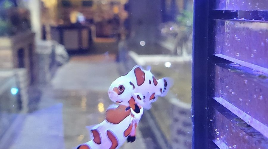 Saltwater Fish Shipment at Fish Gallery Houston on 11/20