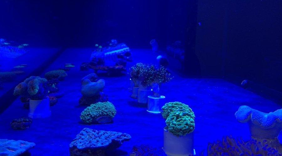 New Corals at Fish Gallery Dallas 12/12