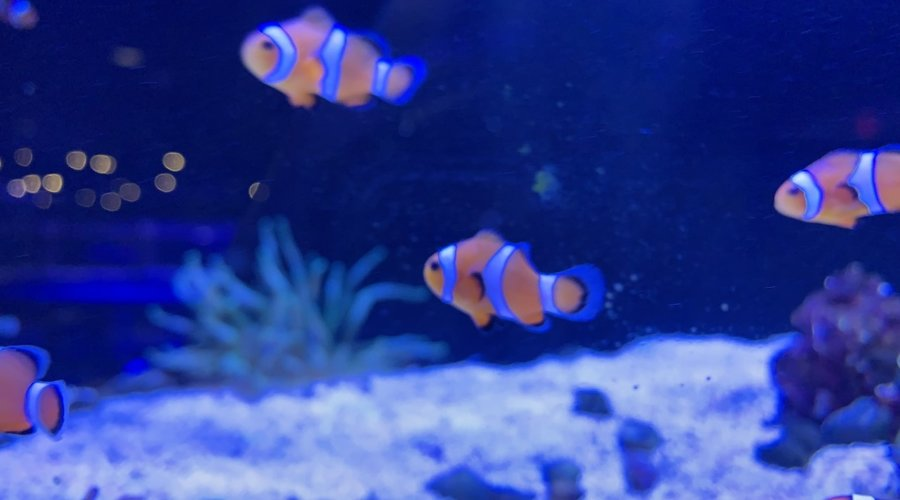 New Arrivals for Fish Gallery Woodlands 12/18/20