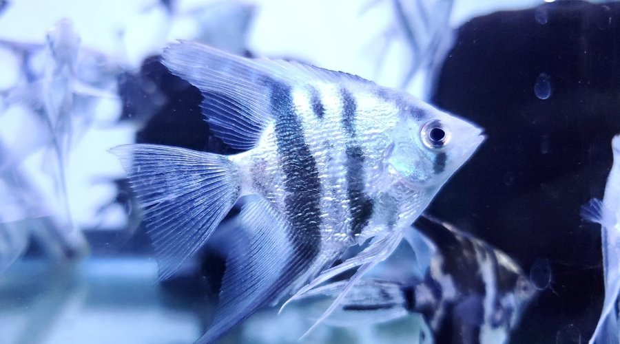 Fish Gallery Houston New Arrivals!