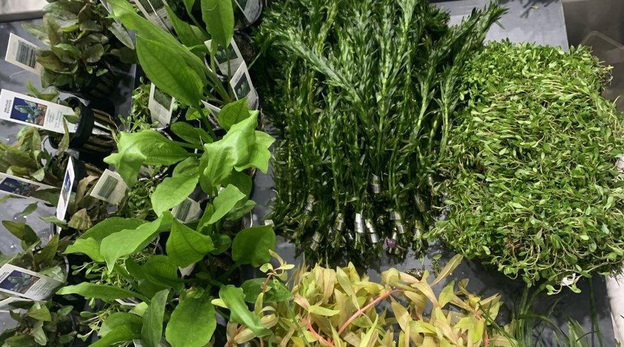 New Plants at Fish Gallery Dallas
