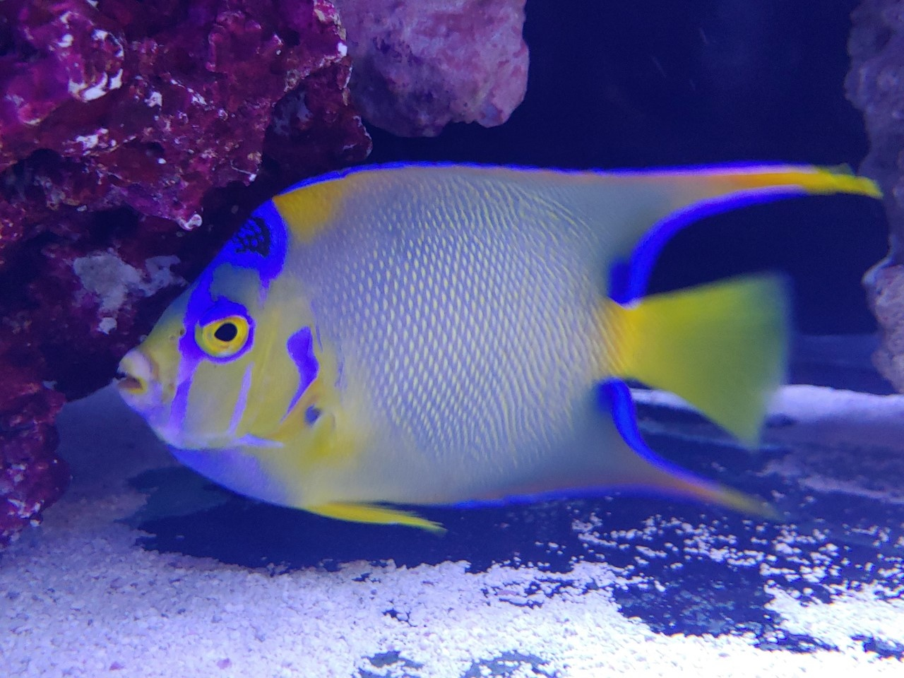 Saltwater Arrivals at Fish Gallery Houston!