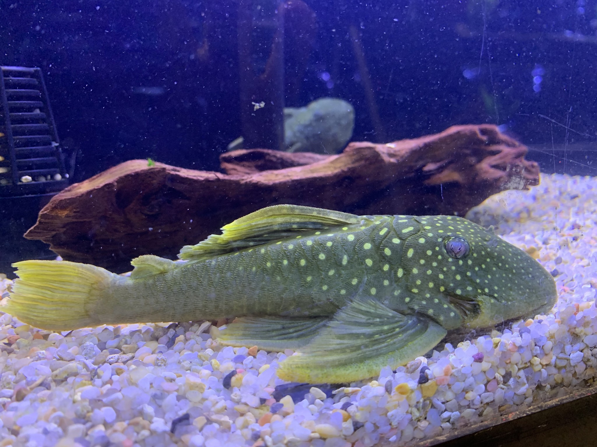 Saltwater and Freshwater New Arrivals at Fish Gallery Woodlands 1/19/2021