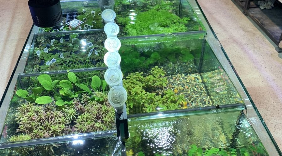 Saltwater Inverts, Corals and Live Plants New Arrivals for Fish Gallery Woodlands