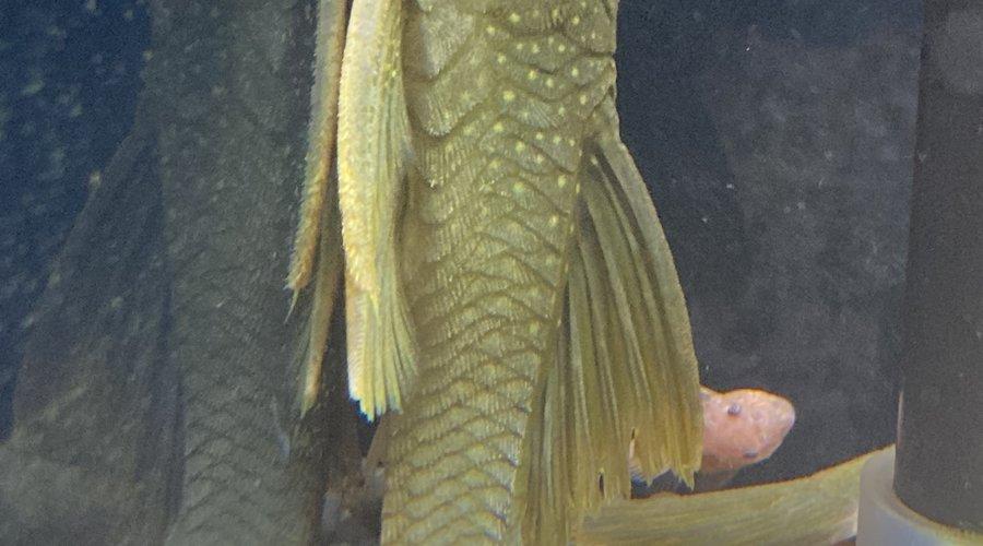 Freshwater New Arrivals FGD 3/23/21