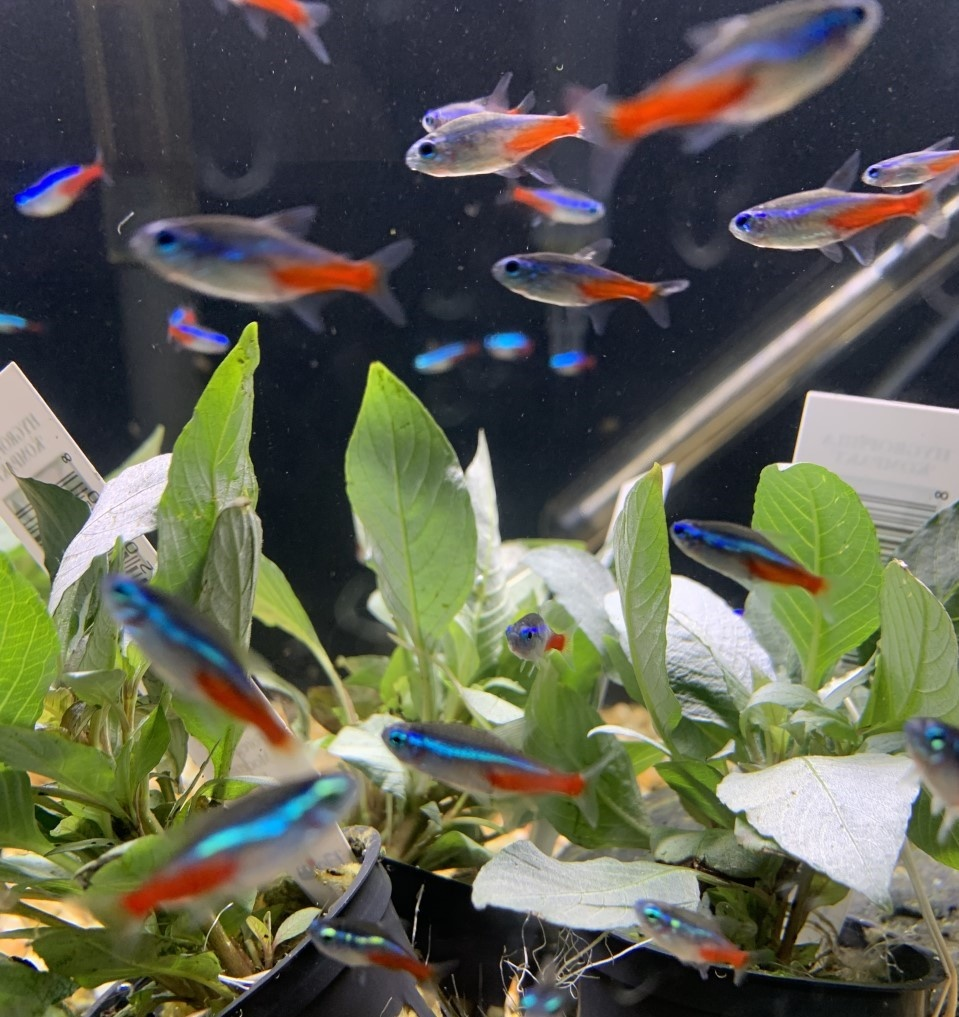 Huge Order of Freshwater Fish and Plants in Dallas!