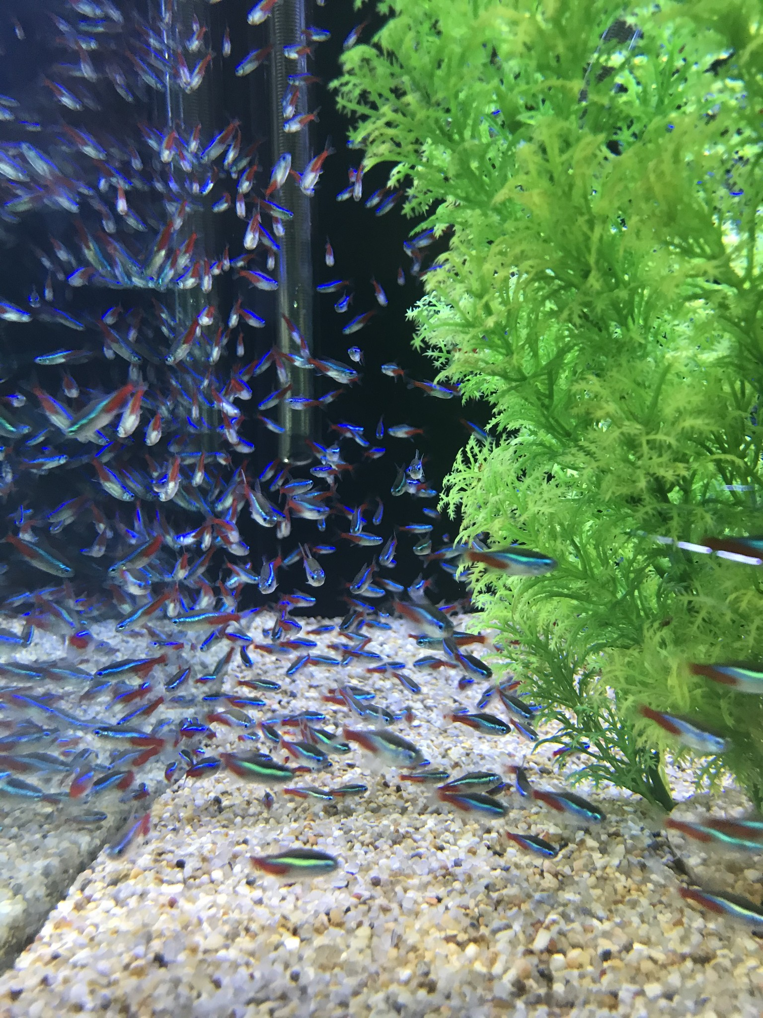Freshwater, Saltwater and Live Plant New Arrivals - Fish Gallery Woodlands - 4/2/21