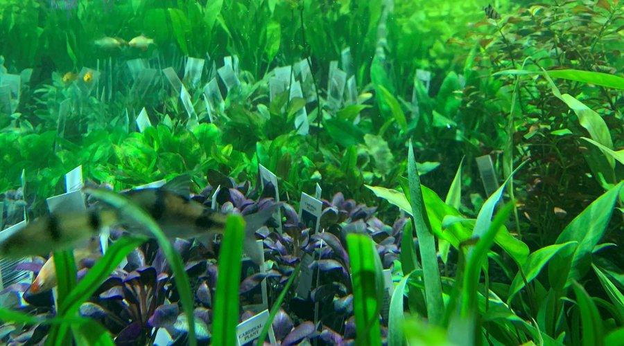 Fresh Cut Plants and Fresh Caught Fish at Houston!