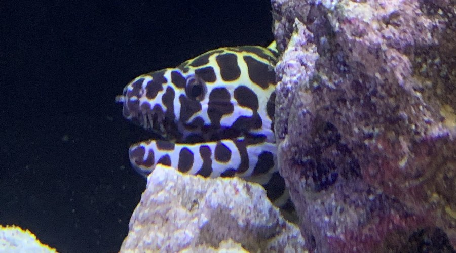 New Clownfish and Eels At Houston!