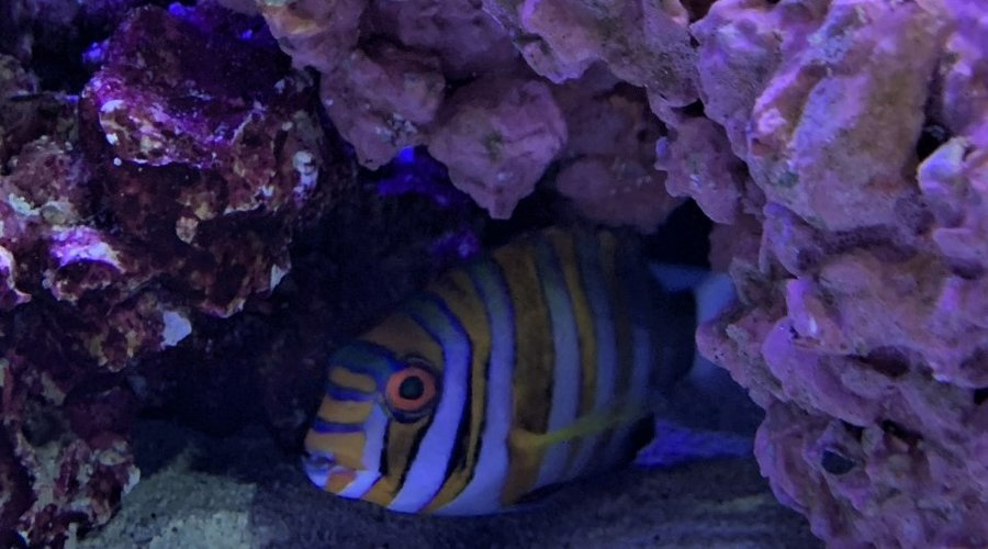 New Live Plants, Fresh and Saltwater Fish in Houston!