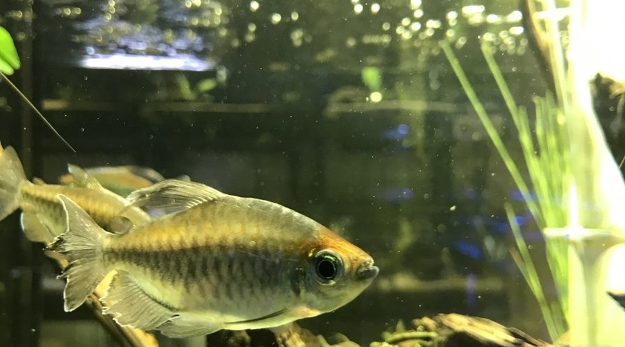 Fish Gallery Woodlands New Arrivals for the Anniversary Sale 6/26/21