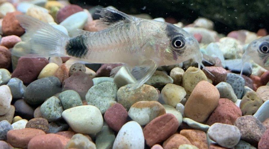 New Freshwater Fish At FG Houston