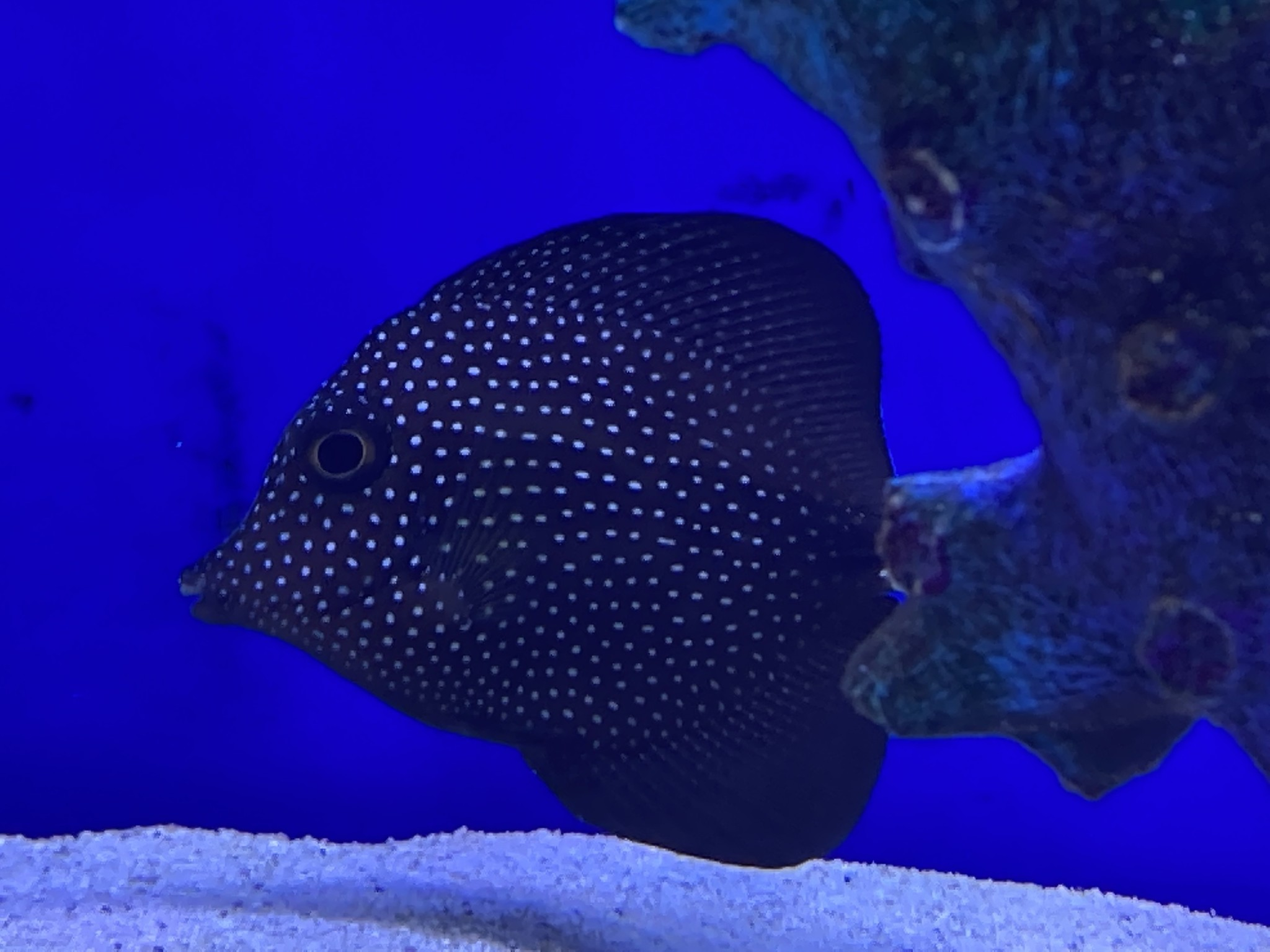 Dallas Saltwater AND Freshwater New Arrivals