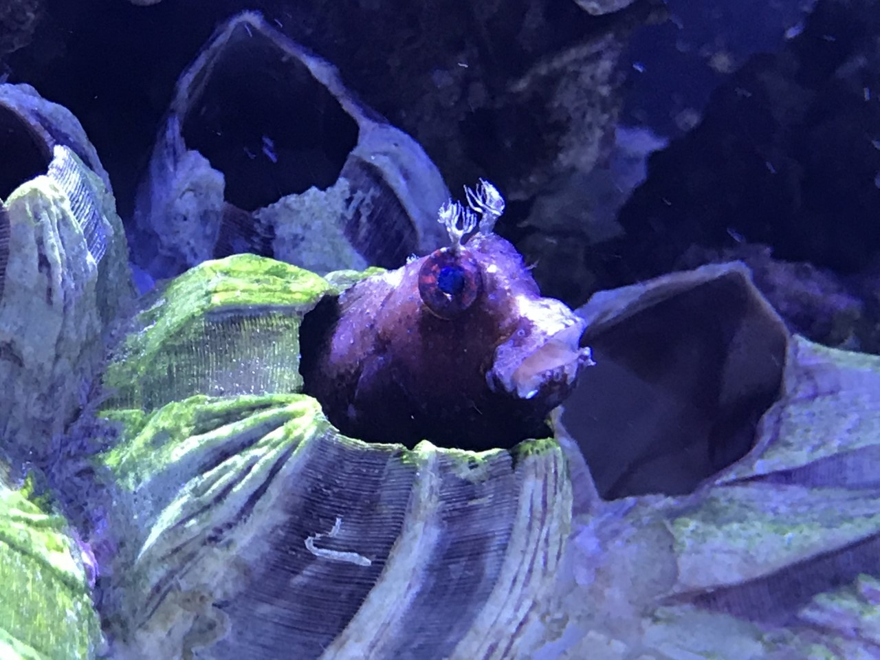 Saltwater and Freshwater New Arrivals at Fish Gallery Woodlands 7/23/21