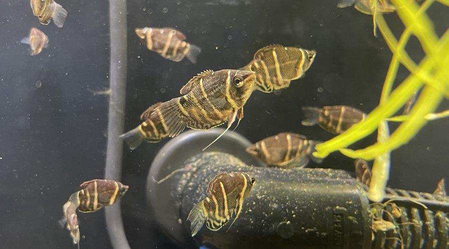 New Fresh Water Fish 9/4/21