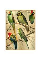 Artwork Parrots 16 x 20
