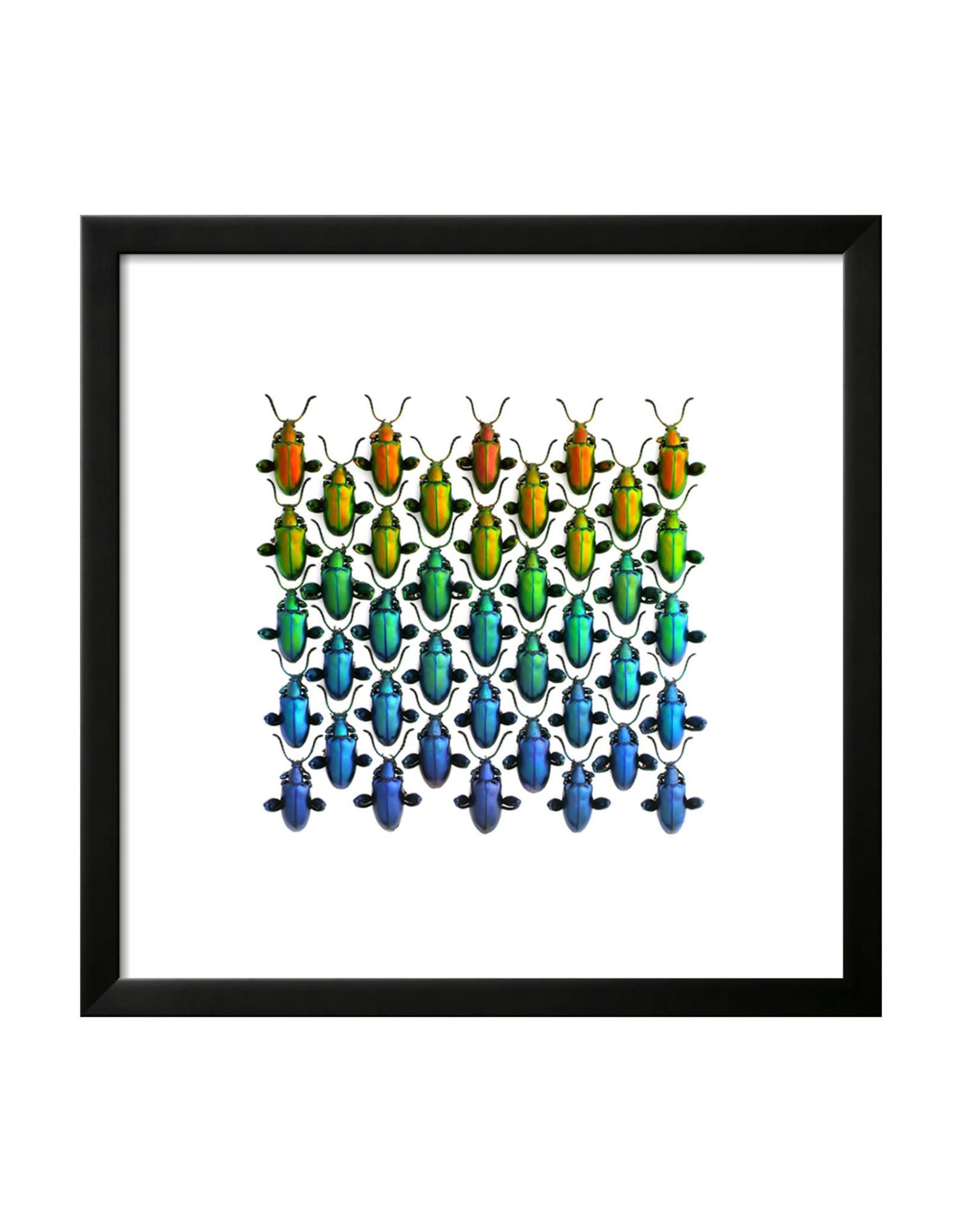 Artwork Sagra Spectrum 20x20