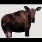 Montana Decoy Co. Montana Decoys Moose ll Decoy