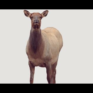 Montana Decoy Co. Montana Decoy Eichler Elk