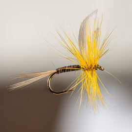 South Bend South Bend Ginger Quill