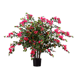 Allstate Floral Bougainvillea Plant in Pot 24 inch by Allstate Floral