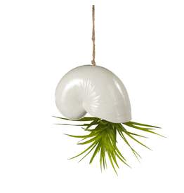 Midwest-CBK Hanging Shell Ornament 4 inch Planter for Air Plants