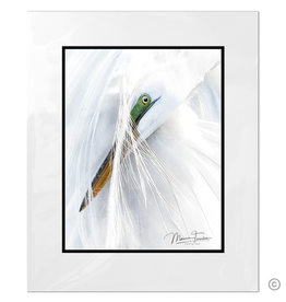 Maureen Terrien Photography Art Print Egret Preening D 11x14 - 16x20 Matted