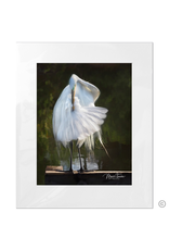 Maureen Terrien Photography Art Print Egret Preening C 11x14 - 16x20 Matted