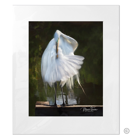 Maureen Terrien Photography Art Print Pier Egret Preening C 8x10 - 11x14 Matted