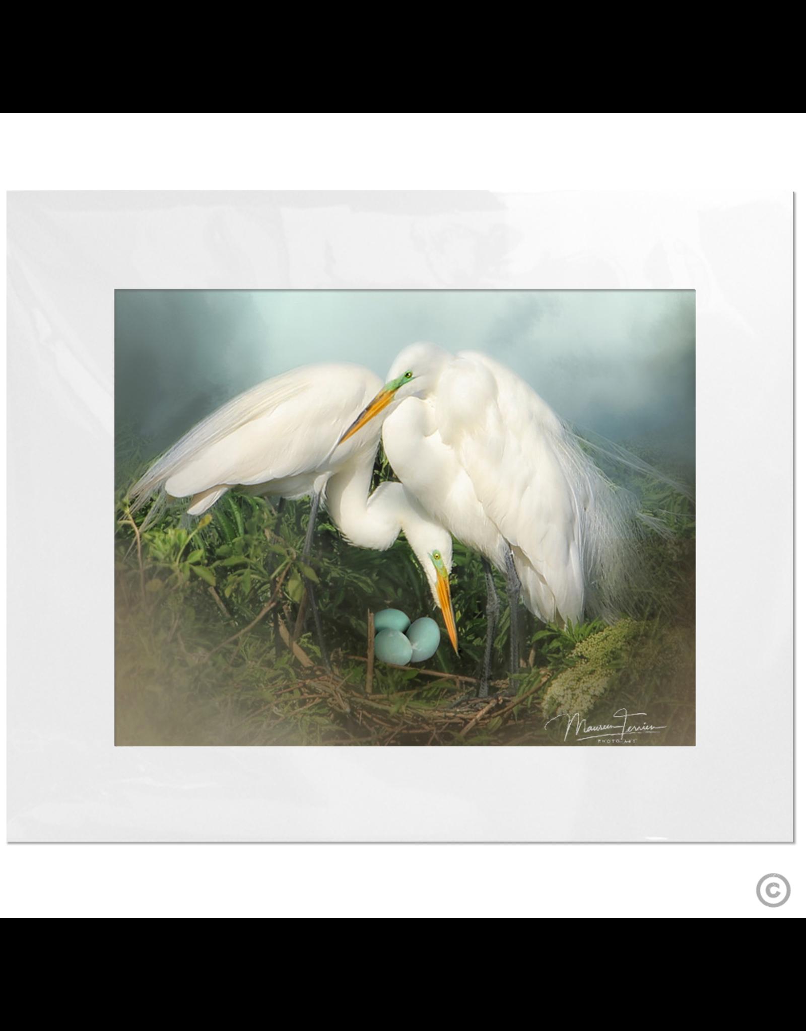 Maureen Terrien Photography Art Print Nesting Egrets 8x10 - 11x14 Matted