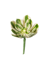 Darice Artificial Succulents Green w White Stripes Pick 3.75 inch