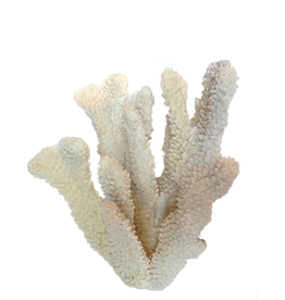 A.A.F. Decorative Finger Coral Cluster 6x8 inch Home Accents Decor