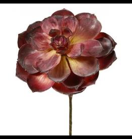 Winward Flowers Floral 300701.BU Succulent