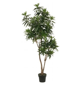Winward Silk Plants Green Dracana Reflexa Tree 6ft