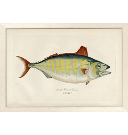 Wendover Art Group Large Short Finned Tuna w Off-White Frame 28x40