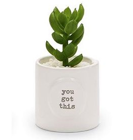 Mud Pie Mini Positive Potted Succulents With You Got This