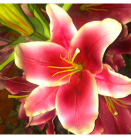 Winward Flowers Floral 97323.OH Orhid red-Pink Lily Casablanca Open 43 inch