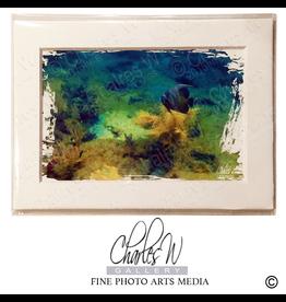 Charles W Photo Art Cards 013 Angel Fish