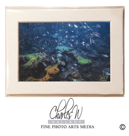 Charles W Frameable Art Cards Reef Fish Lauderale By The Sea