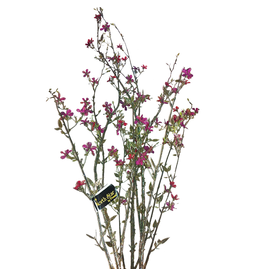 Premier Christmas Flowers Floral  Raspberry Blossom Branch