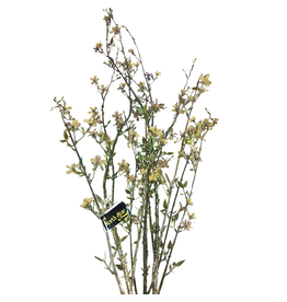 Premier Christmas Flowers Floral Glittered Blossom Branch - Beige