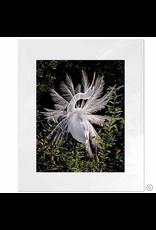 Maureen Terrien Photography Art Print Snowy egret A 11x14 - 8x10 Matted