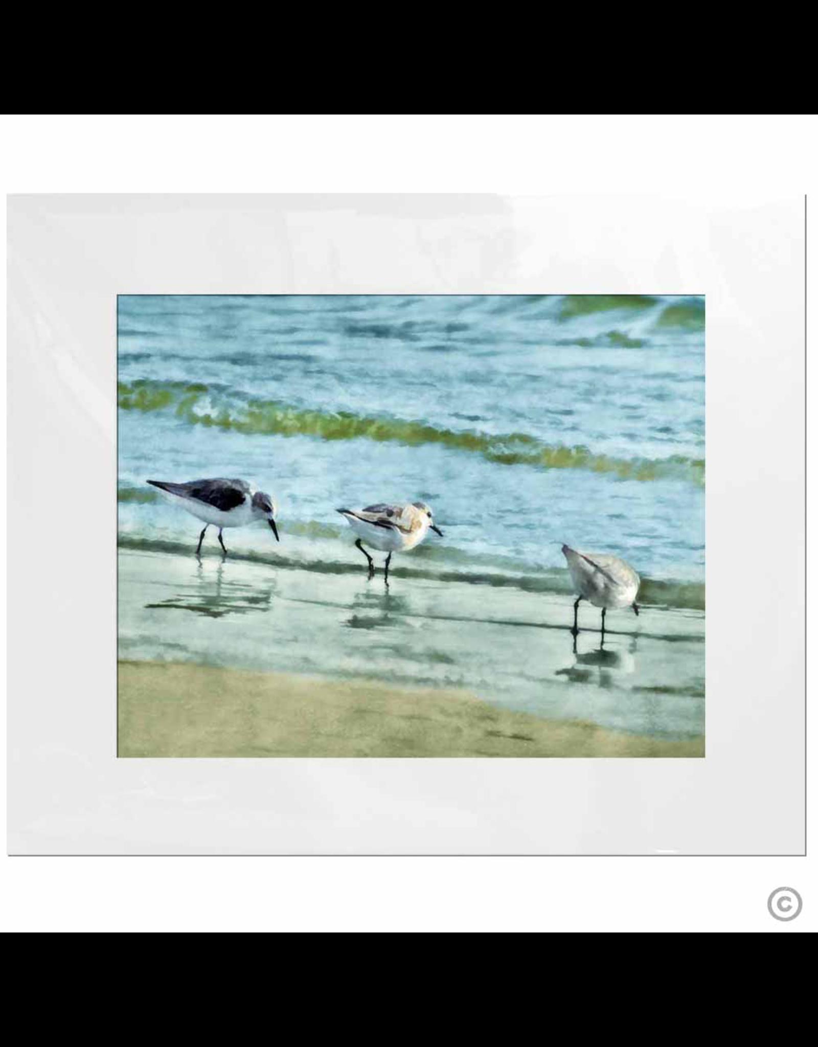 Maureen Terrien Photography Art Print 3 Sandpipers I 11x14 - 8x10 Matted