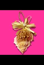 Treasures From The Sea Bursa Sea Shell Ornament TFTS-15