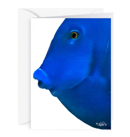 By The Seas-N Greetings Blank Note Card - Cash - Gift Card Holder - Blue Fish I