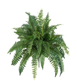 Winward Giant Boston Fern Bush 38 Inch