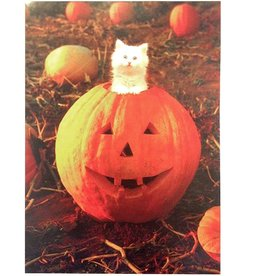 Avanti Halloween Card Cat in Pumpkin Happy Pumpkin Day