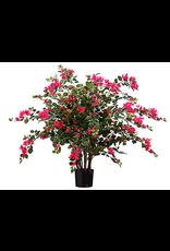 Allstate Floral Bougainvillea Plant in Pot 24 Inch