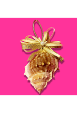 Treasures From The Sea Bursa Sea Shell Ornament TFTS-15