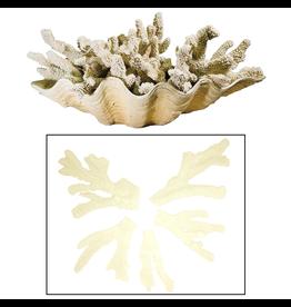 Regina Andrew Design Finger Coral Decor 5 Piece Set Assorted Sizes